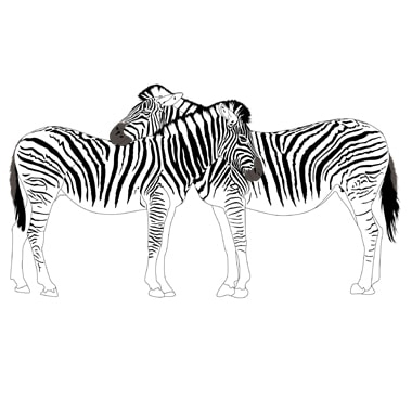 Clipping path zone Raster to vector conversion from picture of two zebra